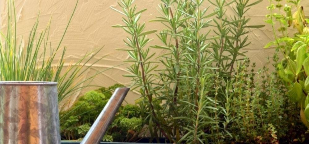 Огород на подоконнике: растения, которые нужно выращивать дома зимой