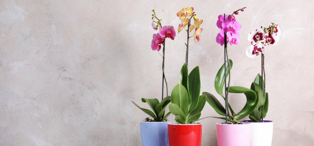 Все, что вам нужно знать о горшке для орхидеи