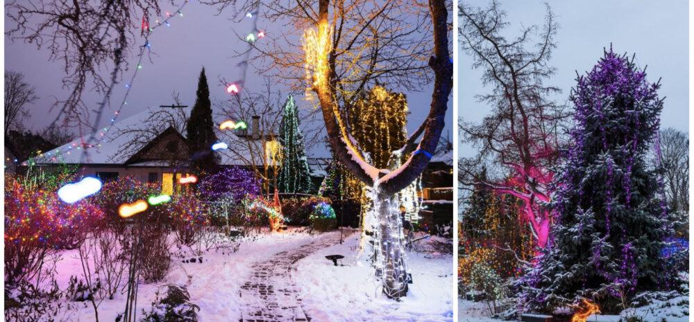 ГАЛЕРЕЯ │ Рождественское чудо: 30 тысяч лампочек украсили дом