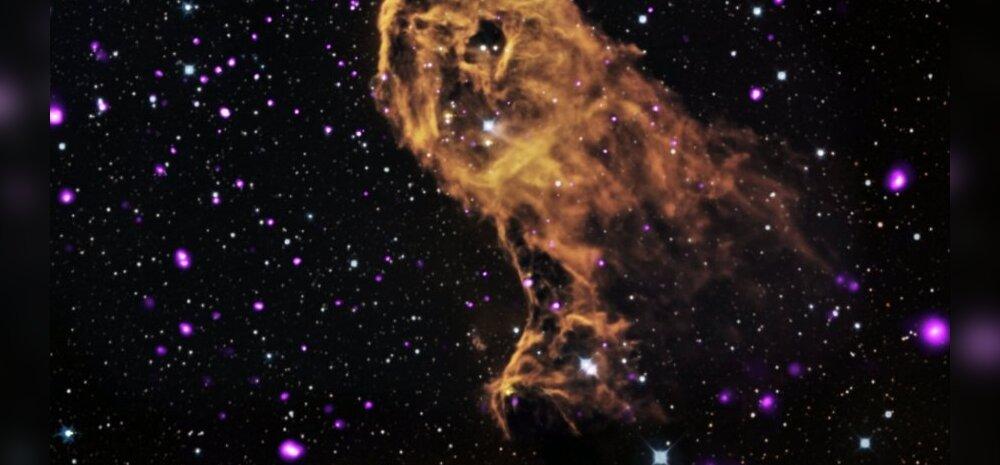 Paljud Elevandi Londi udukogu tähed on verinoored. Nende iga jääb alla saja tuhande aasta. Foto: NASA/CXC/PSU/Getman et al
