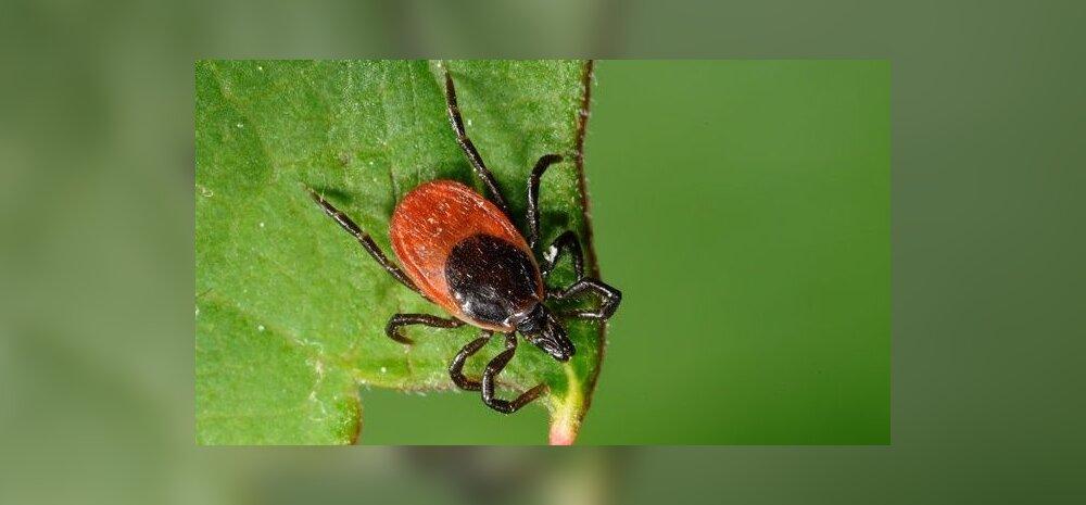 Puugihaiguste kõrghooaeg on käes: kuidas neid ennetada ja oma tervist kaitsta?