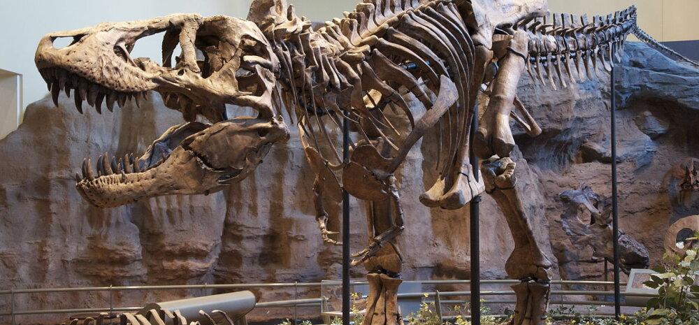 Türannosauruse lõuad purustasid luid 3,5 tonni raskuse jõuga