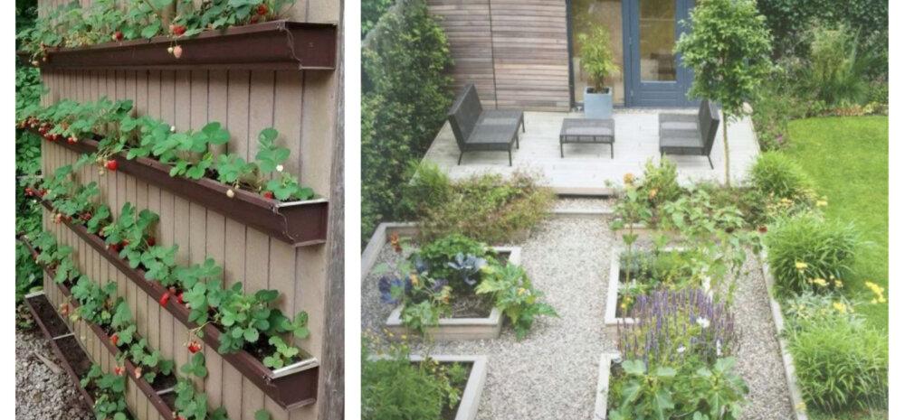 FOTOD | 10 stiilset ideed, kuidas kujundada hoovi pisike juurviljaaed