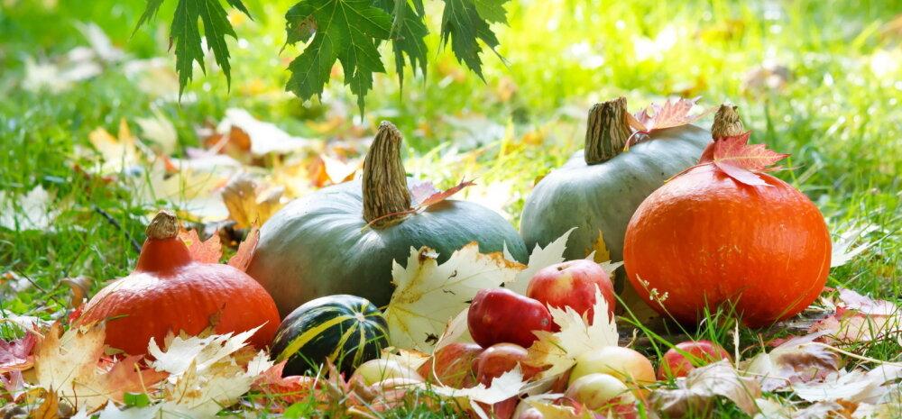 НА ЗАМЕТКУ | Календарь огородника и садовода на осенние месяцы