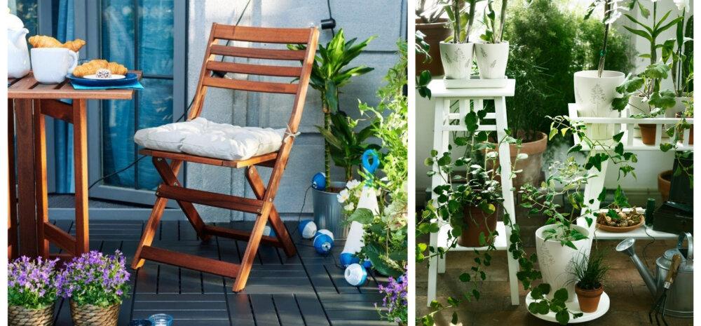 Городской сад от 40 евро: как превратить типовой балкон в зеленый оазис