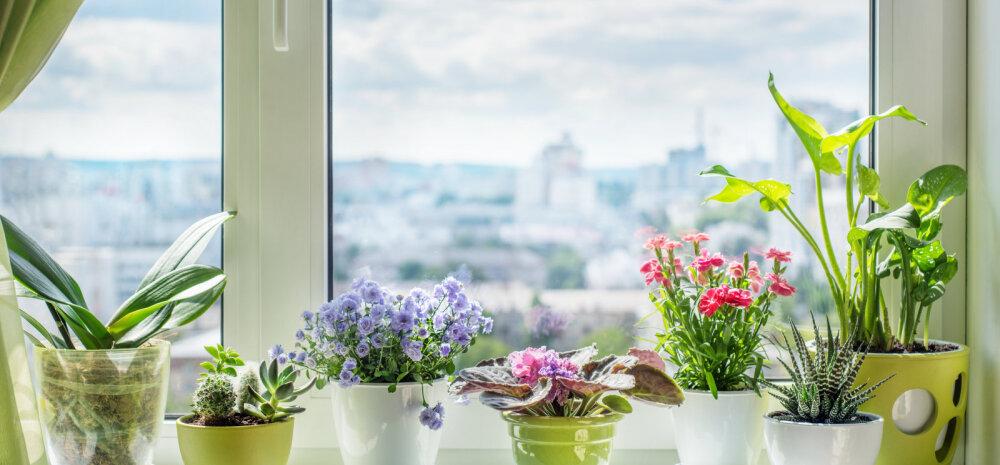 Польза вашему дому: как выбрать правильное растение для каждой комнаты