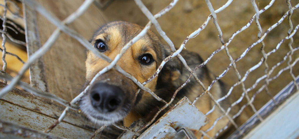 LUGEJAKIRI   Olen veendunud, et selles päevinäinud Kopli kortermajas elaval koeral oleks loomade varjupaigas palju parem