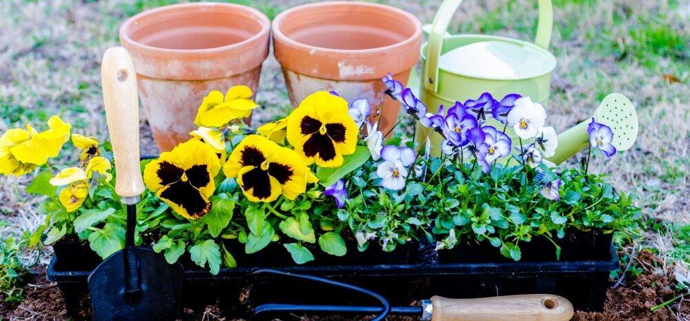 ГОРЯЧАЯ ПОРА │ Основные работы в саду и огороде в июне