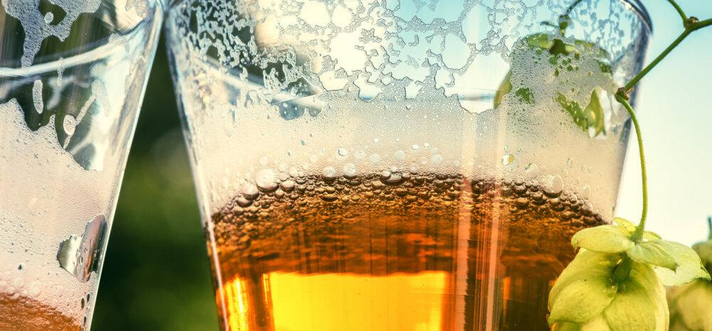 Дома, в саду, на отдыхе: 10 неожиданных способов использовать пиво не по назначению
