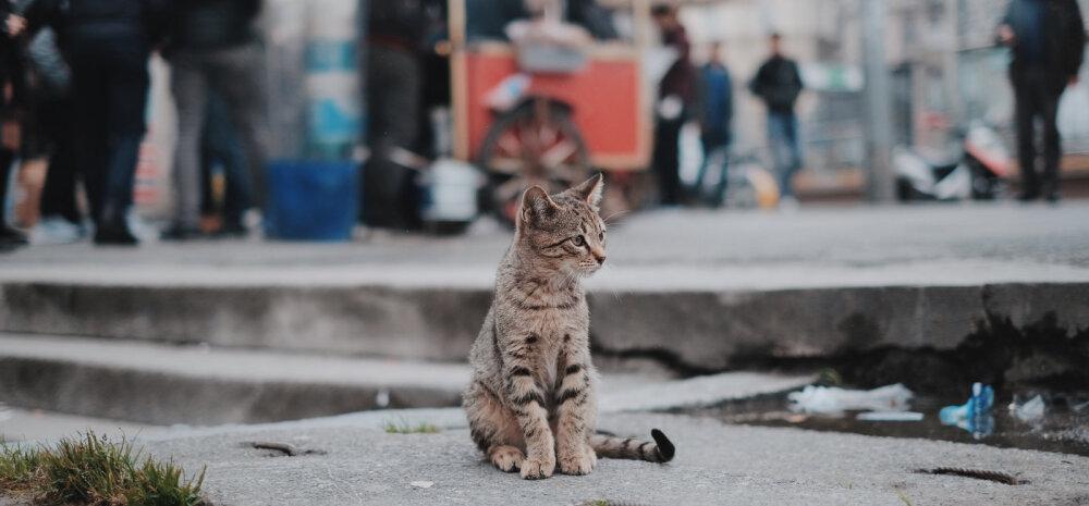 Minu Armeenia. Meenutasin õhtul Jerevani tänavatel nähtud naisnukke, kuulasin kräunumist ja mõtlesin: kas siia ongi need sobimatud naised põgenenud?