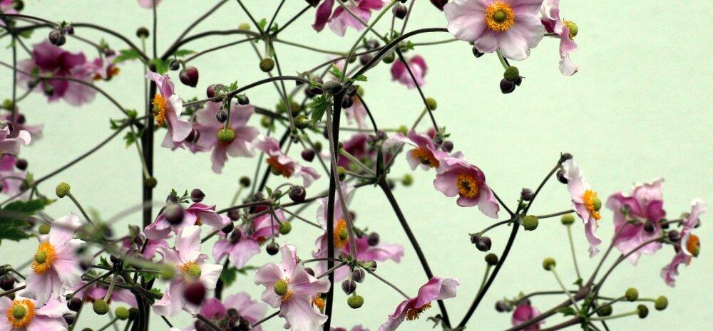 Яркость красок до самой зимы: 6 колоритных многолетников, которые украшают цветники осенью