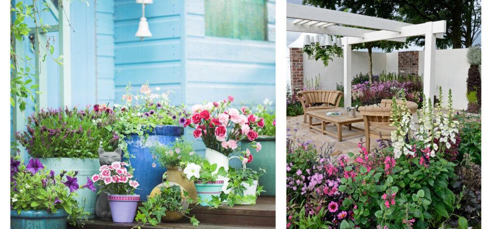 FOTOD | Inspireerivaid ideid, kuidas terrass suvelilledega kauniks sättida