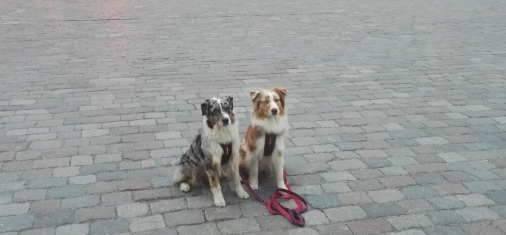 Linnapreilid | Kas ja miks peaks koertega vahel ka linnas jalutuskäike tegema?