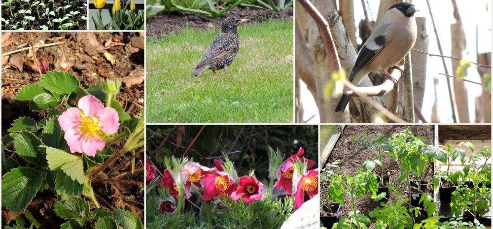 AIAHOOLIKU BLOGI | Segased lood aiaelus