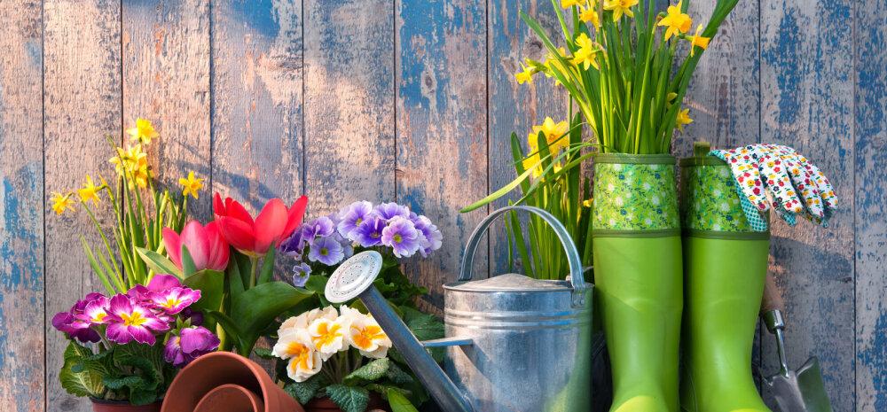Кофе, водка и крапива: 12 необычных и дельных советов по уходу за садом