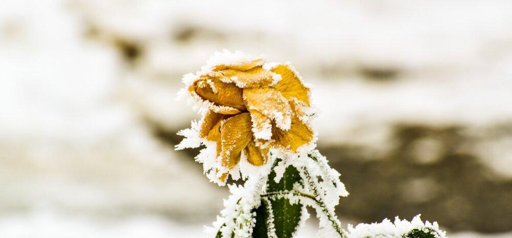 Календарь садовода. Сад, цветник и комнатные растения: что с ними делать в январе?