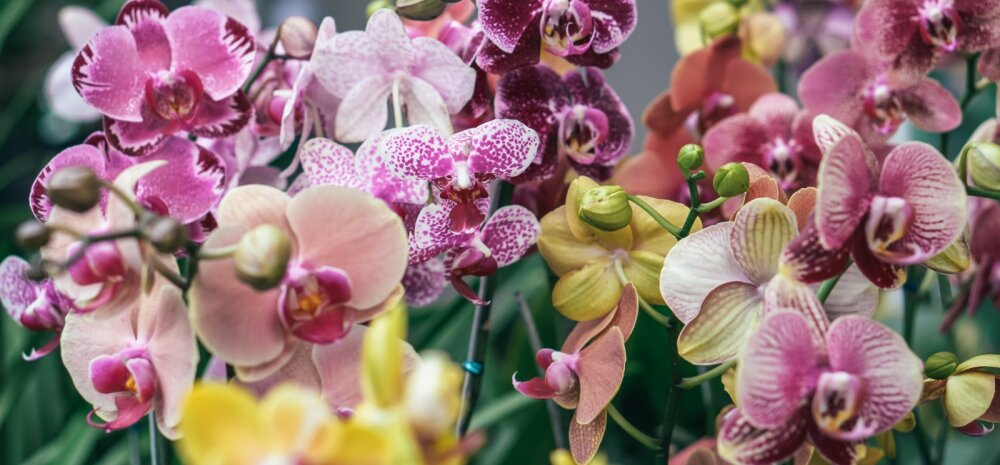 ФОТО   Какие комнатные цветы привлекут в дом счастье, а какие только навредят