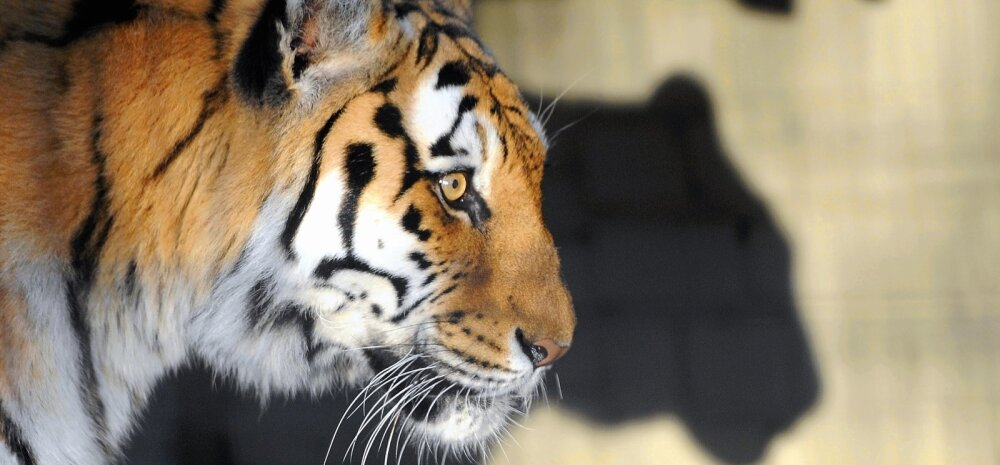 Vaata järele! 10 imelist looma, keda peab iga inimene oma elu ajal oma silmaga nägema
