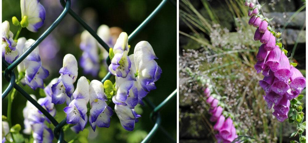 Смертельная красота: ядовитые растения, которые растут в вашем саду