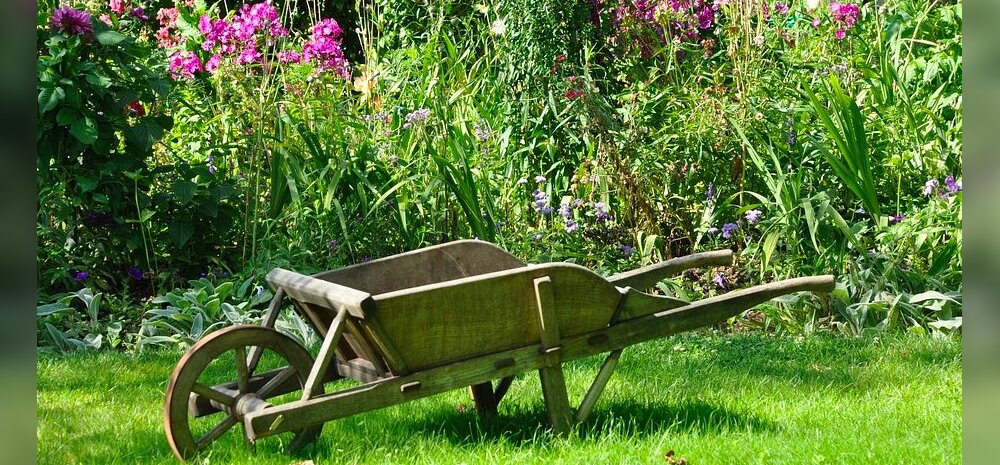 Milliseid taimi tasuks külvata ja istutada täiskuu ajal?