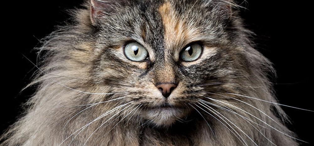 GALERII   Imeilusad loomade portreefotod toovad esile kasside-koerte majesteetliku ürgse ilu