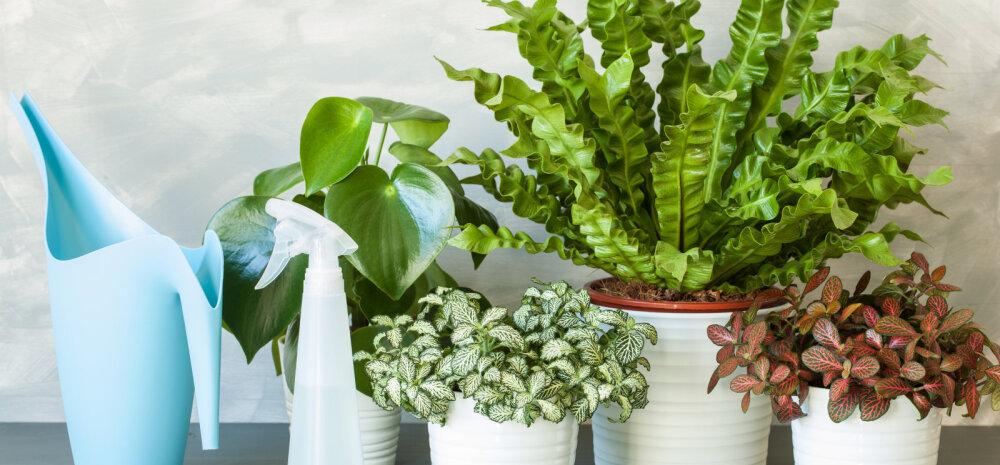 6 способов оживить почти погибшие комнатные растения