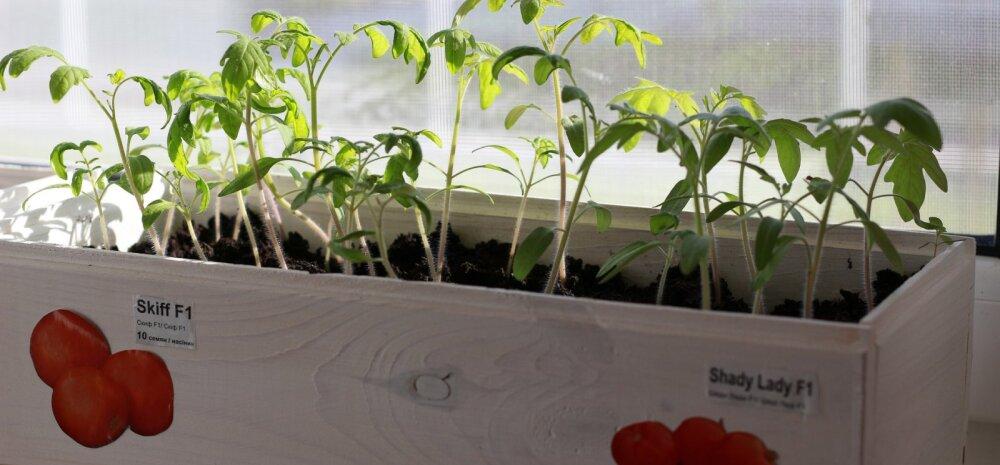 Готовим рассаду зимой: 6 основных советов для проращивания семян в помещении