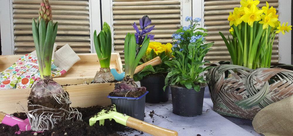 НАШ САД │Дачникам на заметку: садовые хитрости