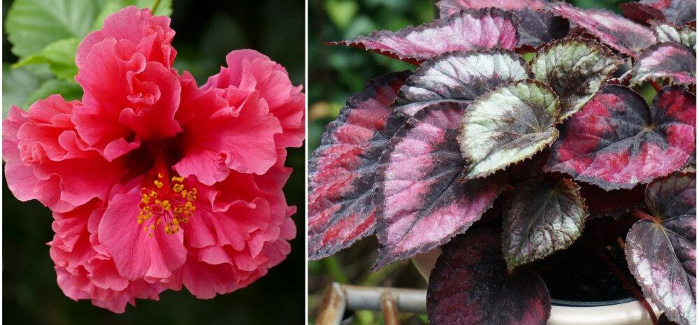 15 cамых неприхотливых комнатных растений