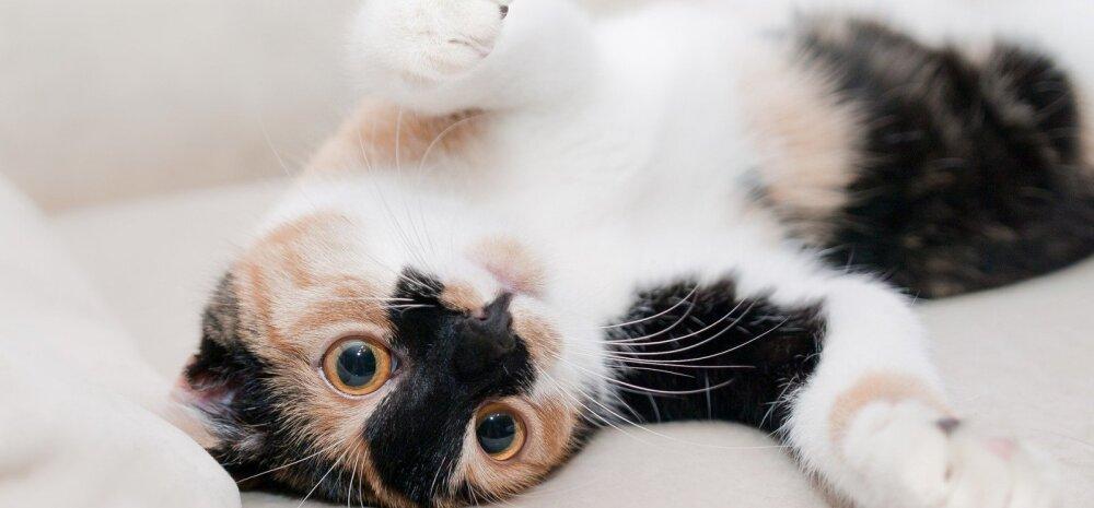 Kass hõõrub oma nägu pidevalt vastu pereliikmeid või mööblit: mida ta sellega öelda püüab?