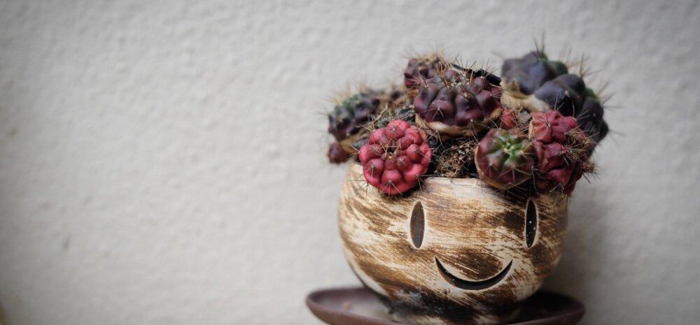 8 растений, которые принесут в ваш дом позитив. А также здоровье и любовь