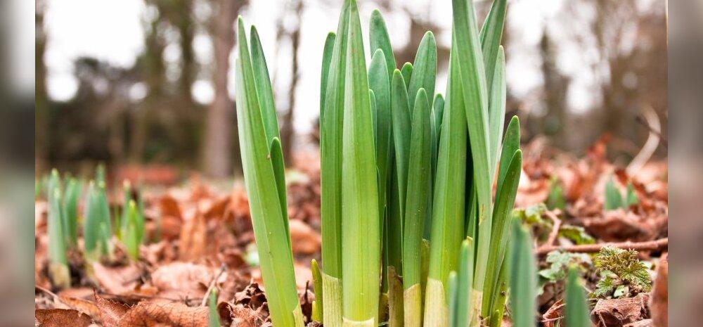 Kevadise aiakoristuse ABC — mida tuleb silmas pidada?