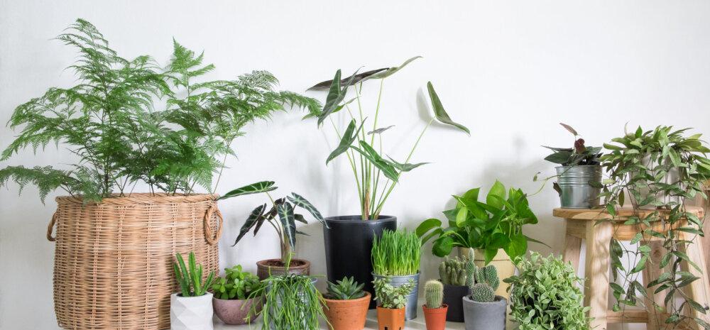 10 самых простых в выращивании комнатных растений