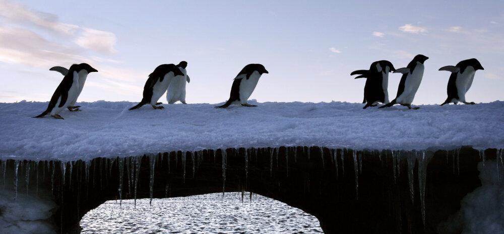Suur pumpamistöö: äkki valaks üleliigse maailmamere Antarktikasse maha?