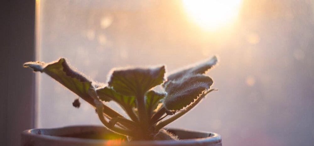 Полезные хитрости, которые сохранят жизнь вашим комнатным растениям этой зимой