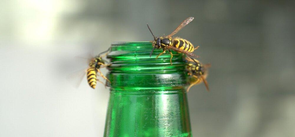 Эти противные насекомые. Эффективные методы борьбы с комарами, мухами и осами