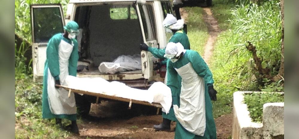 Ebola, see tänase päeva katk, niidab jalust ahve ja inimesi