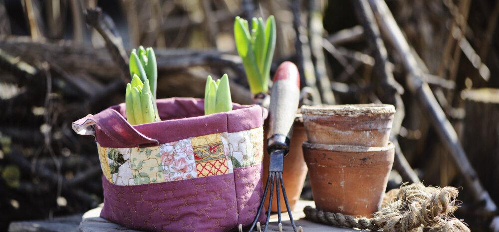 Esimesed kevadised aiatööd, millega saab juba praegu algust teha