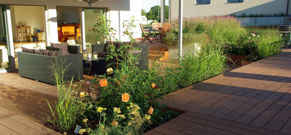 AIADISAINER | Kuidas kujundada aeda — aiakujunduse 10 momenti