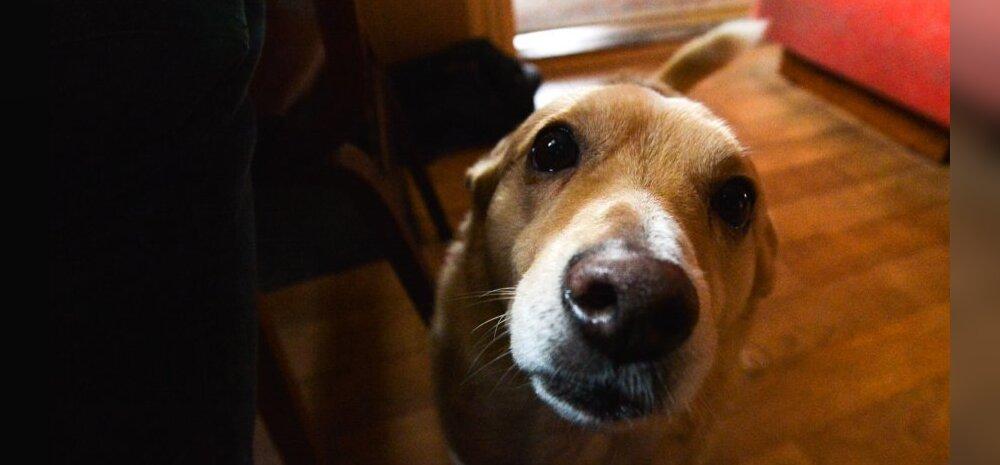 Üksindusahistus koertel on tõsine probleem nii koerale kui omanikule