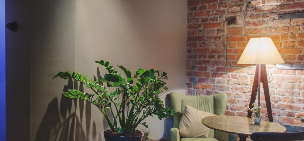Какой цветок поглощает споры плесени, или 17 комнатных растений, очищающих воздух от токсинов лучше всего