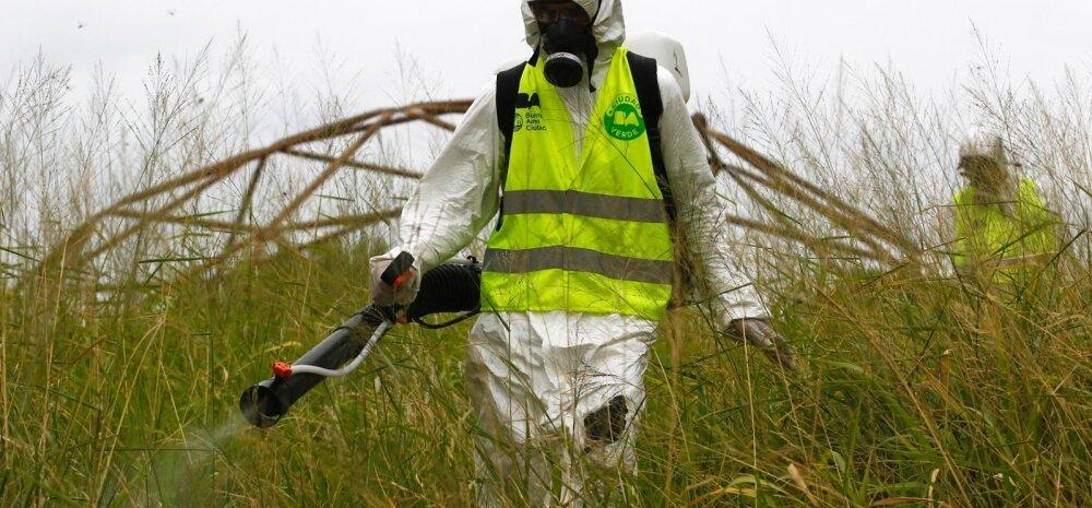 Kolumbias on registreeritud juba enam kui 20 000 zika viiruse juhtumit