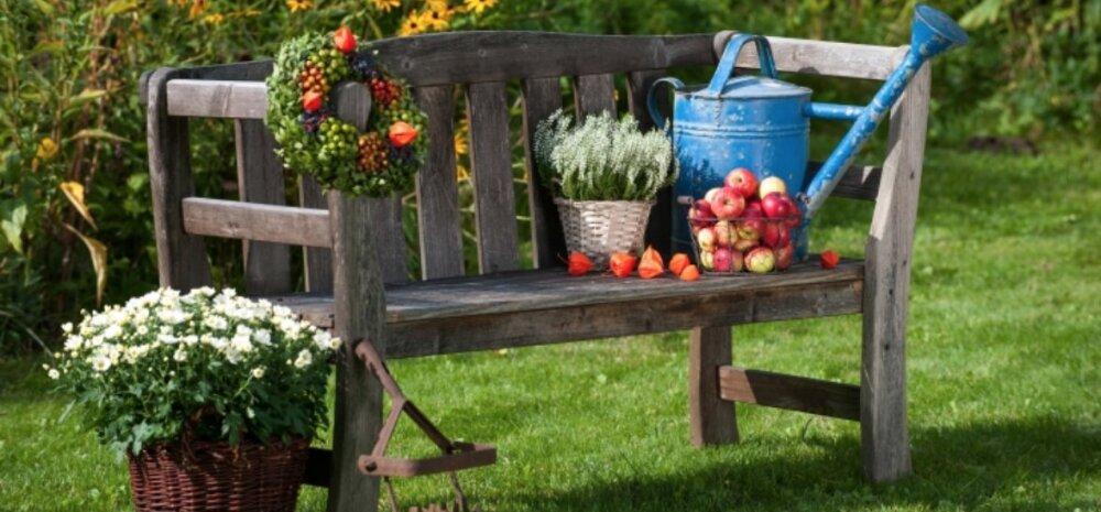 Oktoober aias — tööd, mis tuleks veel enne külmade saabumist ära teha