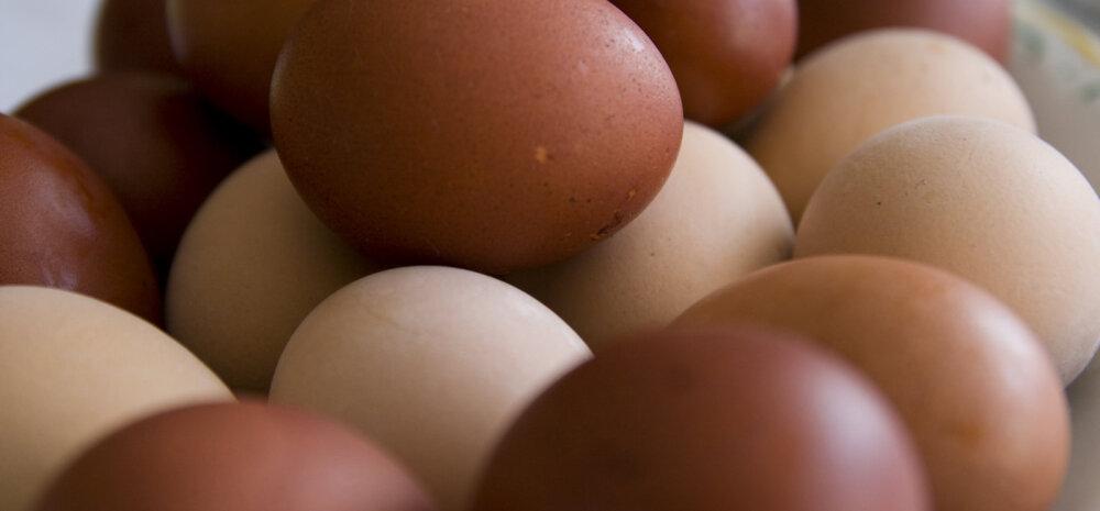 Puhas öko värk: sel aastal kasuta keemiliste munavärvide asemel hoopis looduslikke!