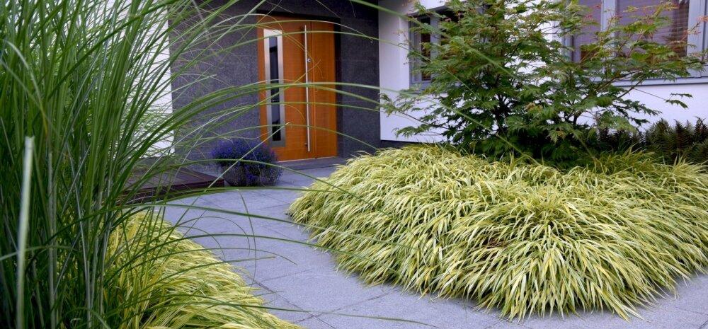 Aiadisainer Merilen Mentaal: laineid löövad julge joonega elegantsed aiad