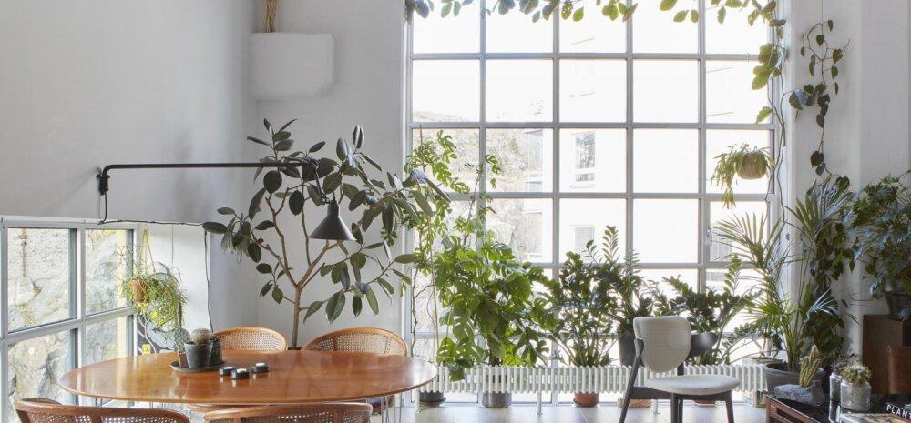 FOTOD │ Üleni valge kodu, kus loovad meeleolu arvukad toataimed