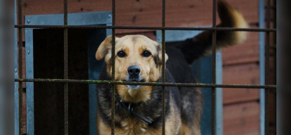 LOE: Sotsiaalmeedias levib kulutulena loomade varjupaiga juhataja õõvastav kirjeldus sellest, mis varjupaikades tegelikult toimub