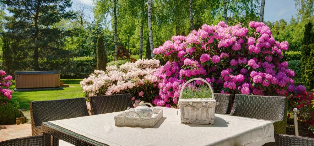SUUR FOTOGALERII   Säti aed suvelilledega kauniks ja omanäoliseks