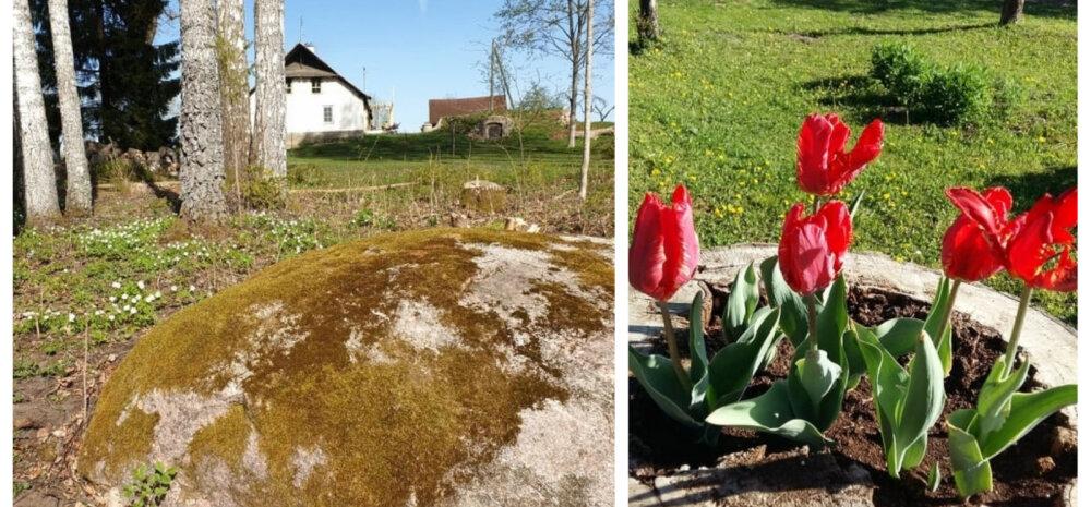 LINNAVURLED MAAL | Püha hiis ja kevad südames