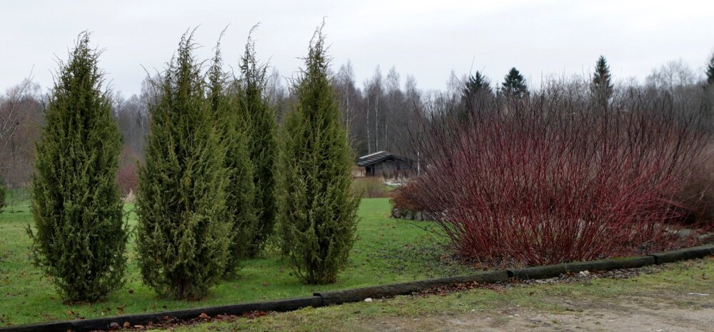 Sadevälja talu okaspuud